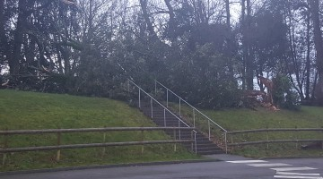 Gale force winds downs tree